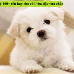 """Gợi ý 100+ cách đặt tên hay cho chó vừa độc vừa """"chất"""""""
