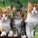 Tổng hợp 1001 cách đặt tên hay cho mèo vừa sang chảnh lại độc lạ