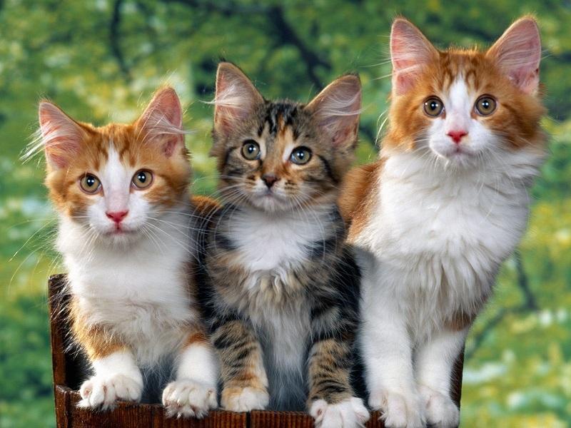 Hướng dẫn đặt tên cho mèo bằng tiếng Anh