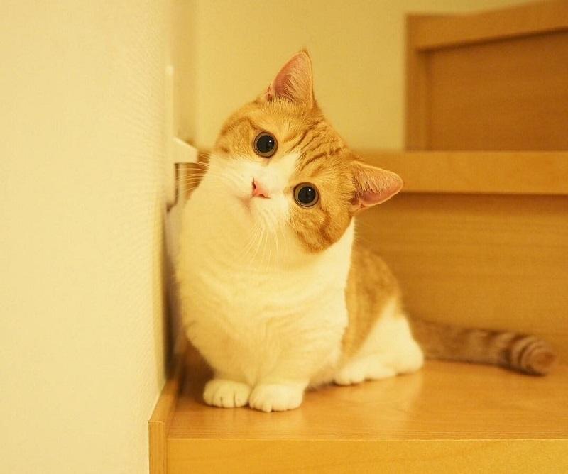 Đặt tên cho mèo hay bằng tiếng Việt