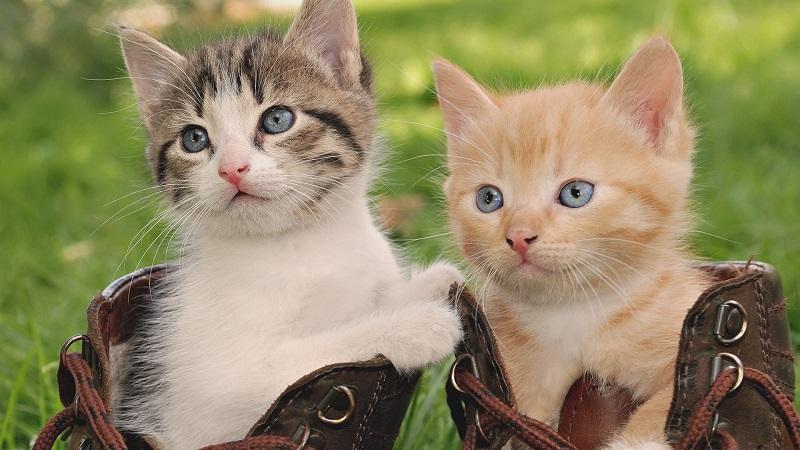 Cách đặt tên cho mèo theo từng giống loài