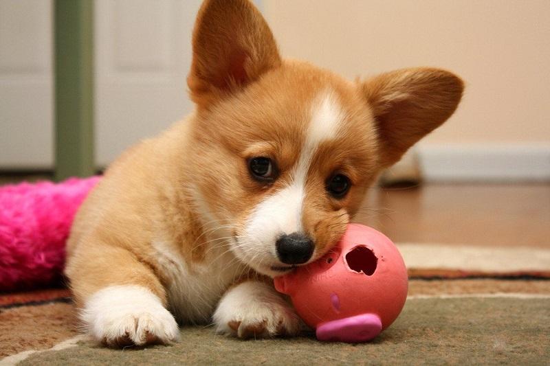 Đặt tên cho chó theo món ăn của Nhật Bản