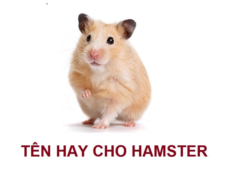 Tên hay cho hamster, đặt tên cho hamster ngộ nghĩnh, dễ thương