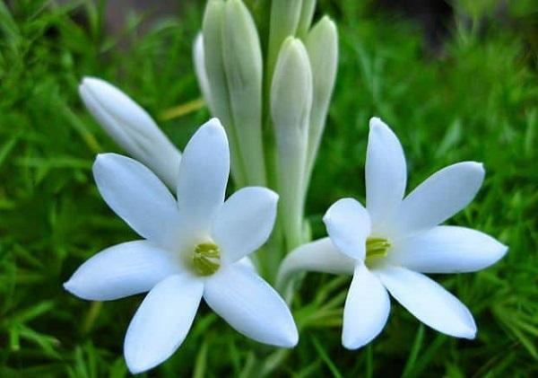 Tên hay cho con gái theo tên các loài hoa, hoa huệ