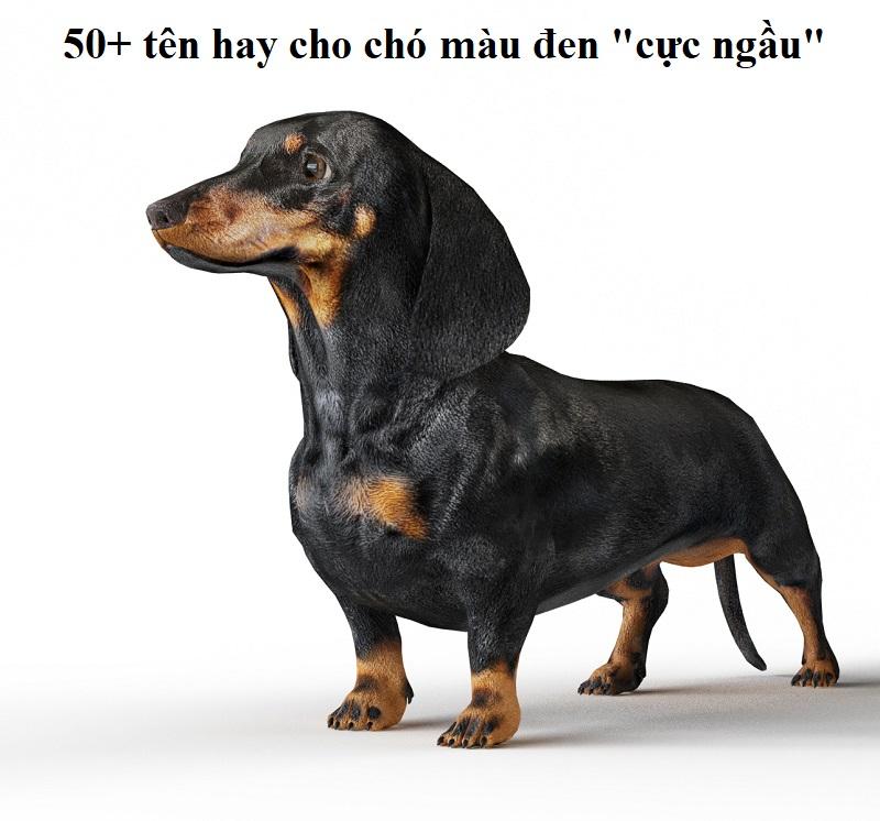 Gợi ý 50+ tên hay cho chó màu đen siêu độc đáo, ý nghĩa