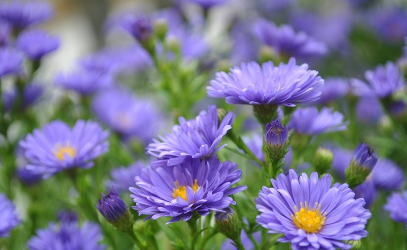 Những tên Hoa hay và ý nghĩa nhất/ Tên đệm cho tên Hoa