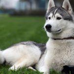Cách đặt tên cho chó đực siêu ''cool'' không đụng hàng