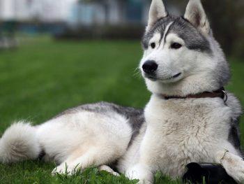 Cách đặt tên cho chó đực siêu cool. Tên hay đặt cho chó đực