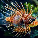 Gợi ý cách đặt tên cho cá cảnh hay nhất BAO chất phát ngất