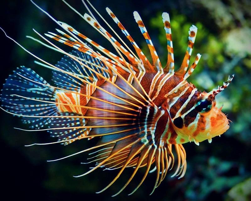 Gợi ý cách đặt tên cho cá cảnh hay nhất BAO chất phát ngất. Nên đặt tên gì cho cá cảnh hay, độc đáo. Tên hay cho cá cảnh.