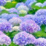 Tên các loài hoa đẹp và ý nghĩa các loài hoa cực Chuẩn Chỉnh