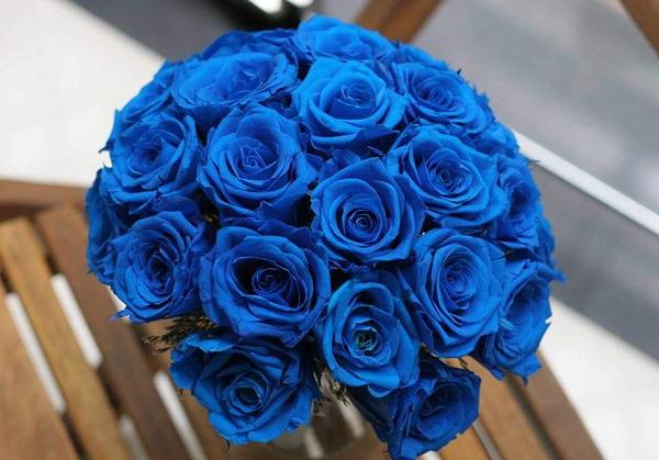 Ý nghĩa các loài hoa, ý nghĩa hoa hồng xanh