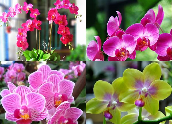 Ý nghĩa các loài hoa, ý nghĩa hoa lan