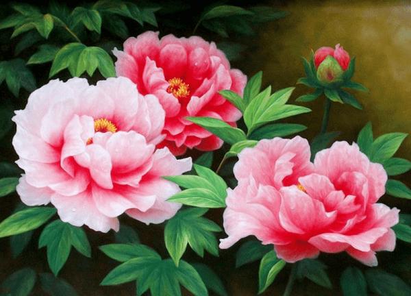 Tên các loài hoa đẹp và ý nghĩa, hoa mẫu đơn