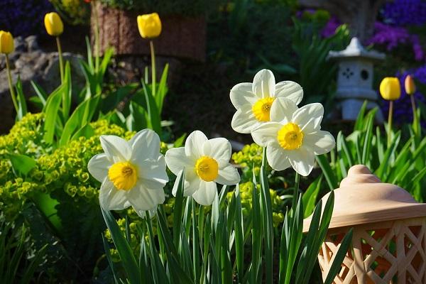 Ý nghĩa các loài hoa buồn, ý nghĩa hoa thuỷ tiên