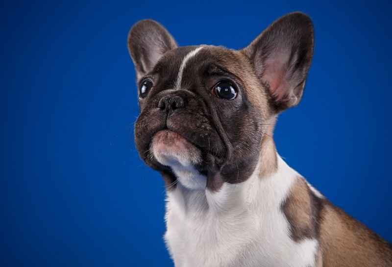 Tên chó bá đạo, tên chó hài hướng, tên chó ngầu